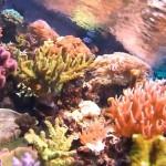 Tipp Nr 2 Actionpro X7 - Unterwassermodus