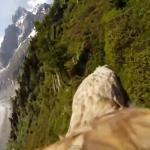 Adler Flug mit GoPro