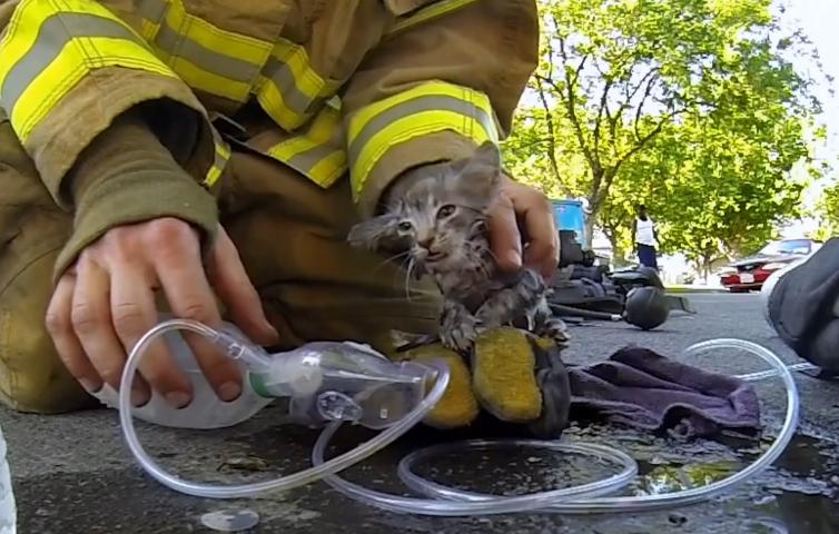 Feuerwehrmann rettet Kätzchen